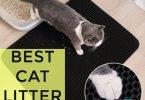 Top 10 Best Cat Litter Mats to Control Mess