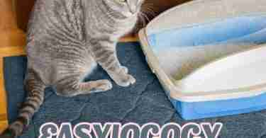 The Easyology Cat Litter Mat Review