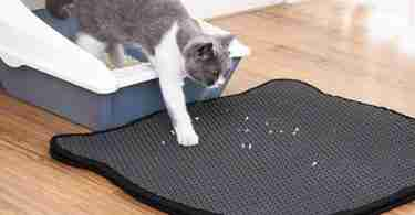 How To Clean Cat Litter Mat The Easy Way